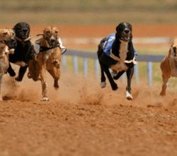dog_racing2-250x250