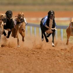 dog_racing